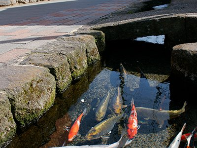 鯉の泳ぐ町(島原市)